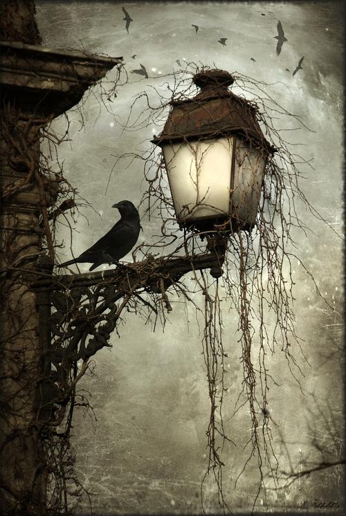 bird_on_a_lantern